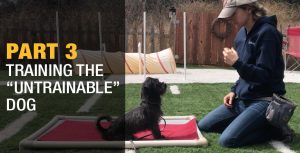 woman dog trainer with blue and white hat on wearing a blue sweatshirt and blue jeans with a green tennis ball in hand and looking at a black dog sitting on a red mat on green turf in the backyard