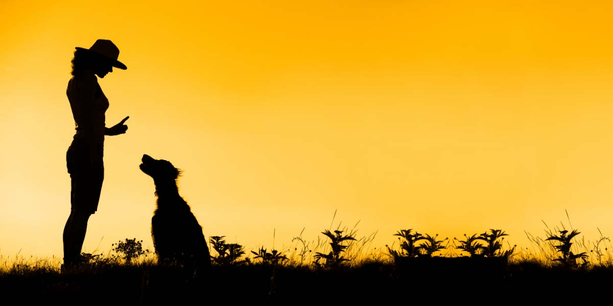 a silhouette during sunset in a field of a dominant woman holding her finger up to stop while looking down at the dog who is sitting and looking up at the moan