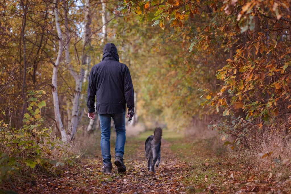 Man and his grey furry dog walking through the forest on a hiking trail together