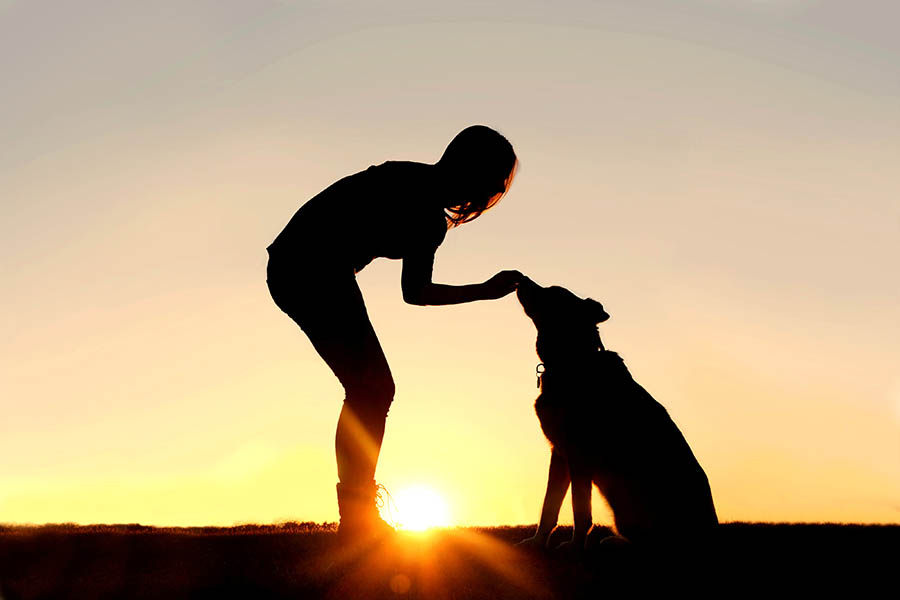 A silhouette of a girl standing outside in the grass with her pet German Shepherd Mix Dog, feeding him treats during training, in front of an orange and yellow sun setting sky.