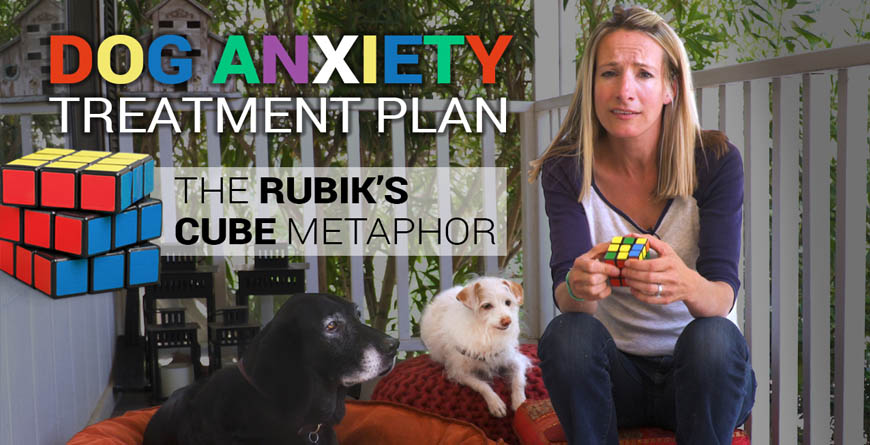 woman holding a rubiks cube while sitting next to a small white terrier dog and a large black lab mix dog