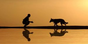 a silhouette during sunset next to a lake with a reflection of a man squatting with his arms out as a dog walks toward him