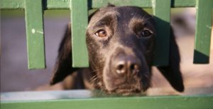 a black dog sticking his face through a green wooden fence
