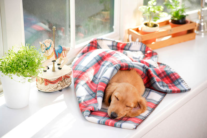 Dog in a quiet place in a house sleeping and relaxing feeling safe