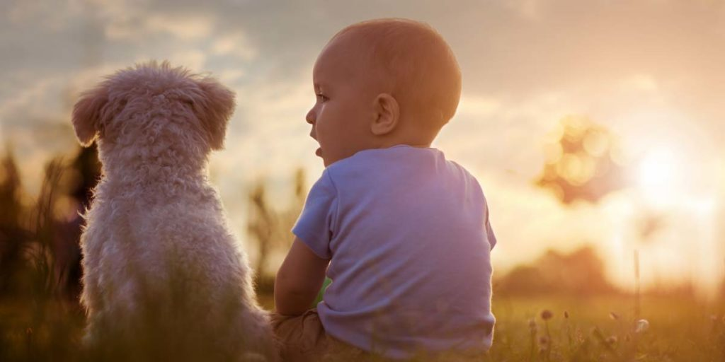 a toddler with a white shirt on is sitting in a green field with the sun setting next to a white curly haired dog