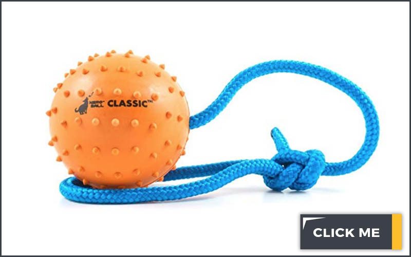 dog toy orange ball on a blue string on a white background