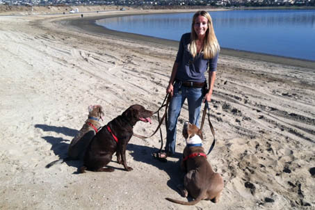 Woman in blue shirt and jeans on the back holding the leash of three different dogs