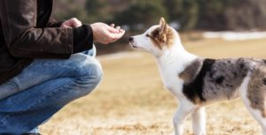 A person in a brown jacket and blue jeans reaching their hand towards a white and black dog to give him a food treat