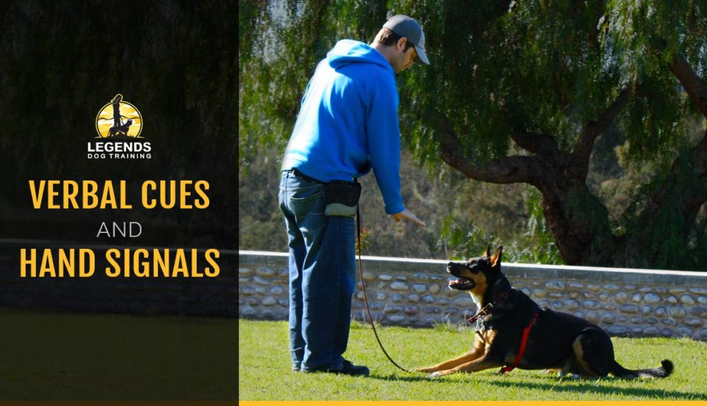 Man in a blue hoodie giving a hand signal to a German Shepard dog training positive reinforcement at a park on green grass