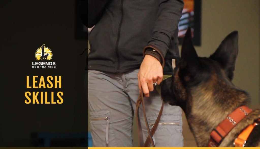 Woman holding a brown leash attached to a belgian malinois dog with training