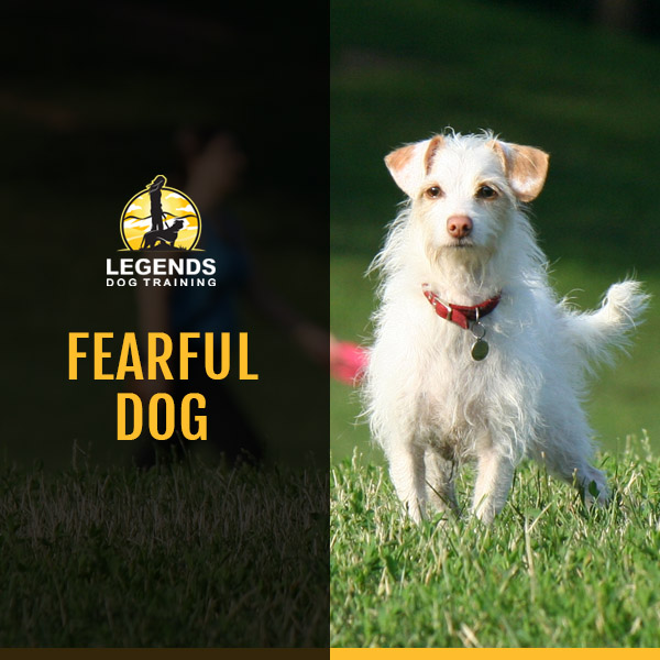 White terrier mix dog standing in a green field with a red collar on