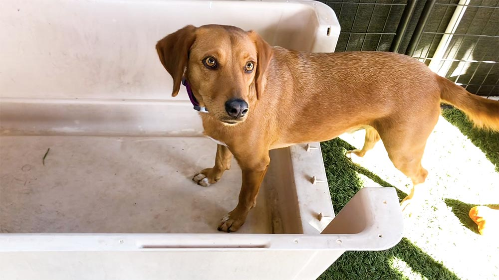 brown dog with 2 paws inside a dog crate