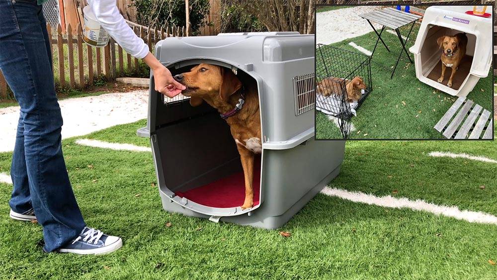 brown dog standing inside a dog crate taking food from a dog trainer