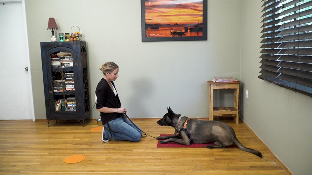 dog trainer working with a belgian malinois on a red mindfulness mat