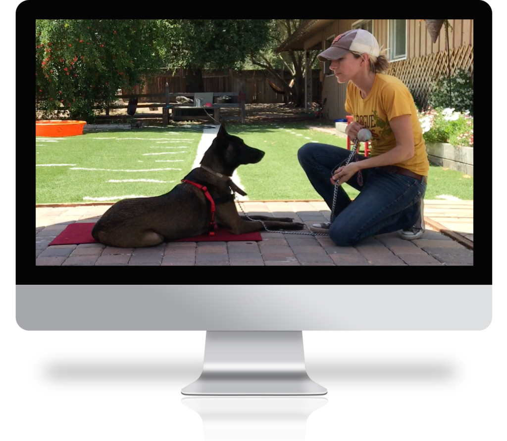 computer screen showing a woman dog training with a brown dog laying calmly on a red mat
