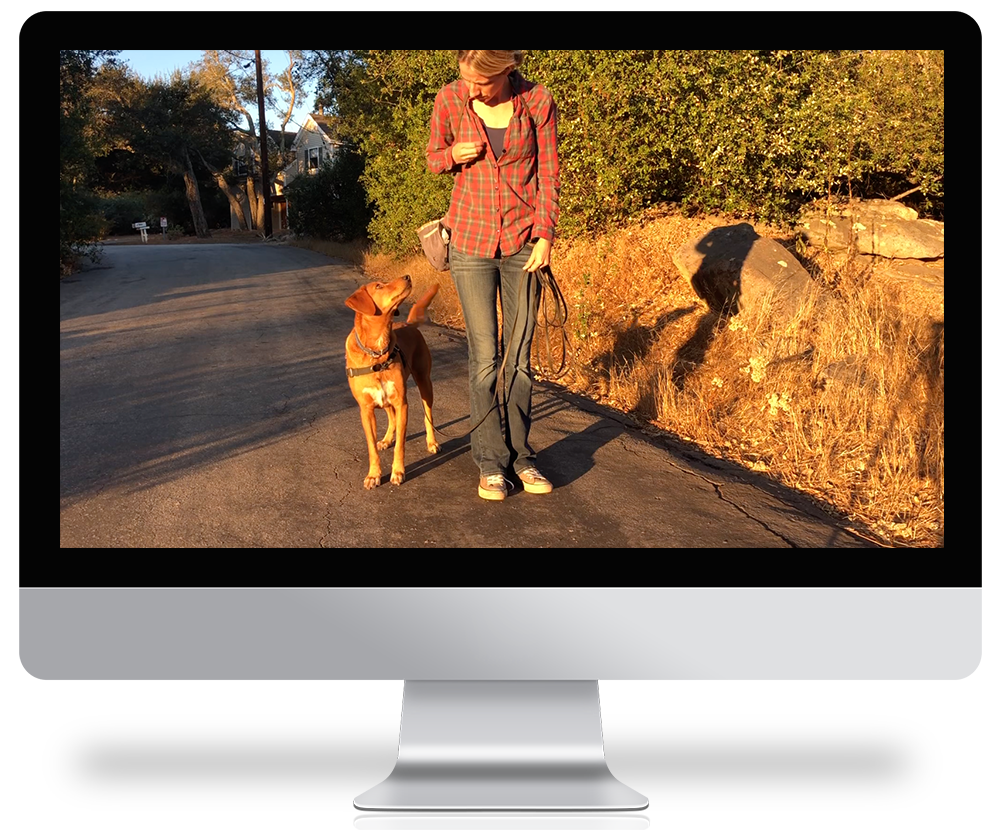 computer screen showing a woman dog training on the street doing heel work exercises