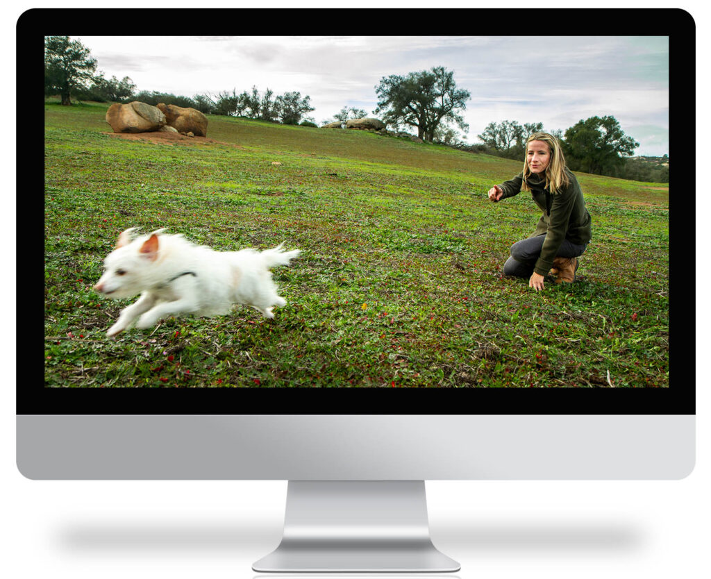 computer screen showing a doing a sendaway with white terrier dog